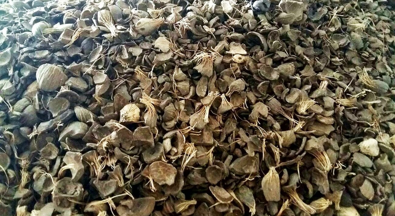 PKS 14 (Premium Palm Kernel Shell/Green Flakes)